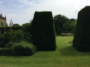 Darcy's Hedge